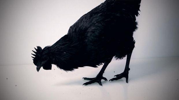 Bildgeschichte: Gothic Huhn