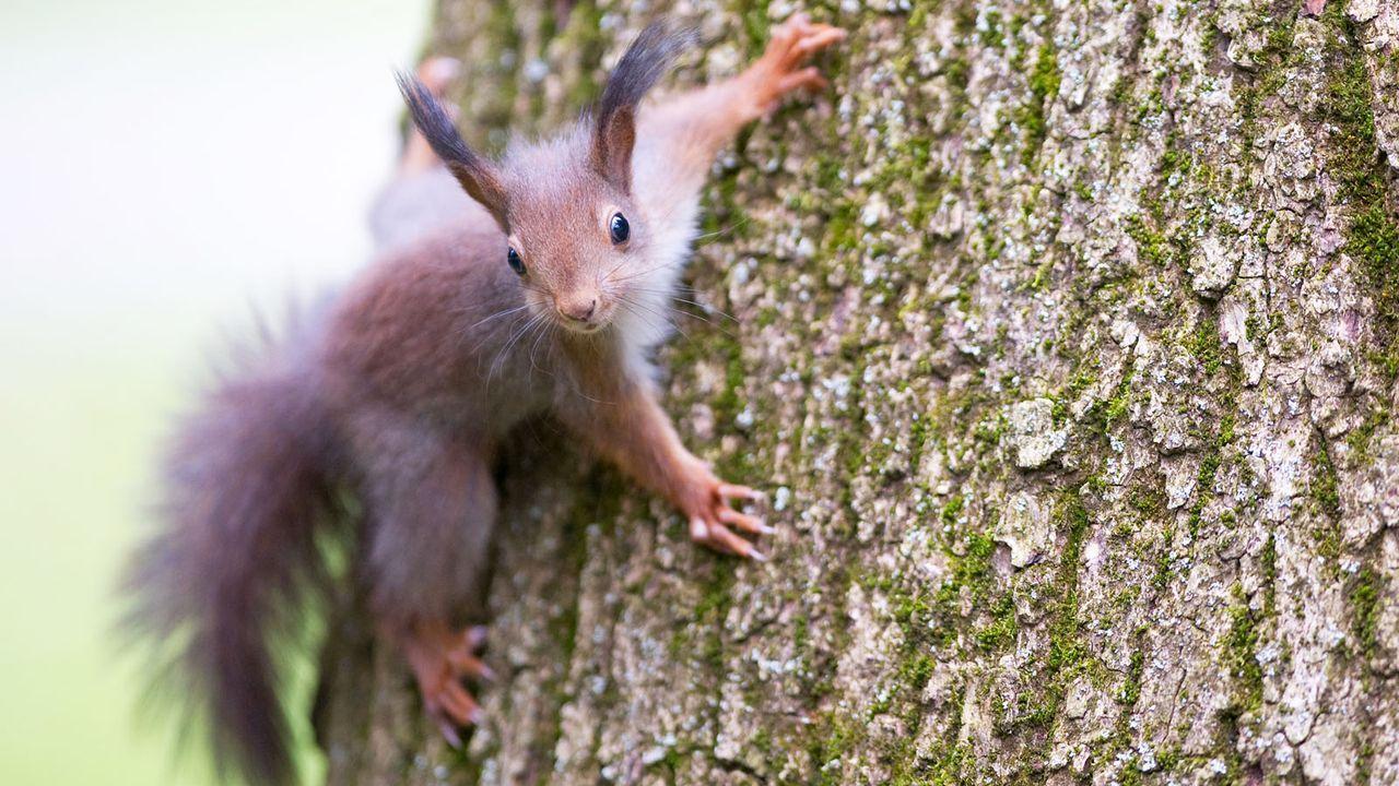 Eichhörnchen - Bildquelle: dpa