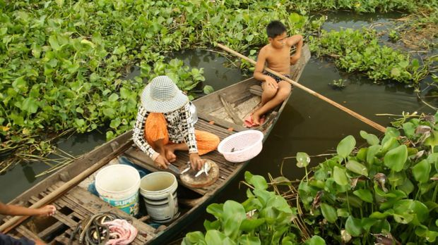 Schlangenernte Kambodscha