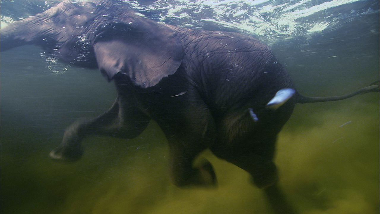 Nach wochenlangen Strapazen hat die Elefantenherde endlich nahrungs- und wasserreiche Gebiete erreicht ... - Bildquelle: Earth   BBC Worldwide Ltd 2007