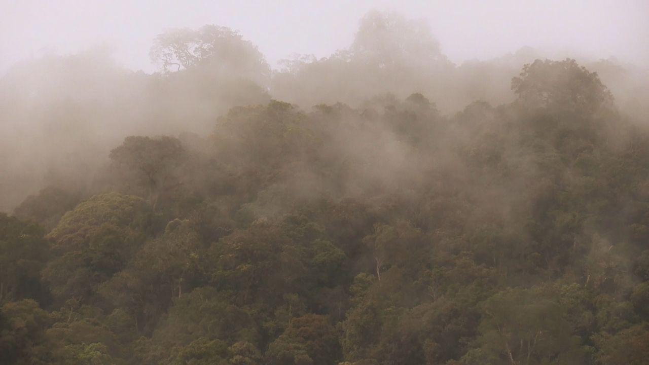Sumatra 20 - Bildquelle: kabel eins