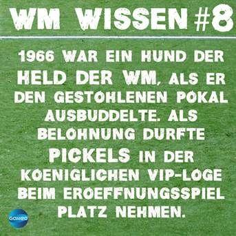 wmwissen8