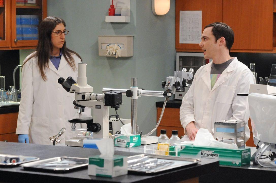 Als Sheldon (Jim Parsons, r.) dazu gezwungen wird, Urlaub zu machen, beschließt er, zusammen mit Amy (Mayim Bialik, l.) in ihrem Labor zu arbeiten .... - Bildquelle: Warner Bros. Television
