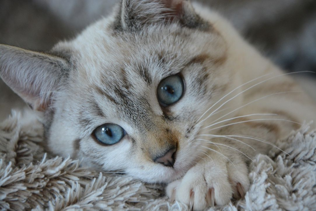 cat-2783601_1920 - Bildquelle: Pixabay