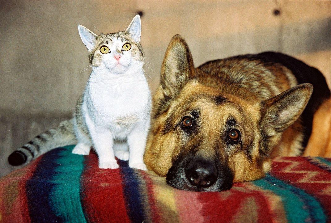 Rex und die Katze von Anneliese Kerling schließen Freundschaft ... - Bildquelle: Sat.1