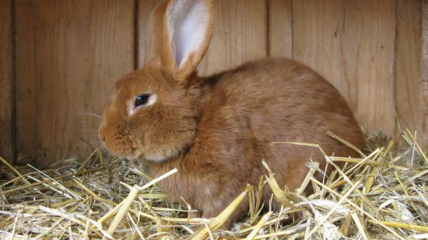 hare-285470_1920