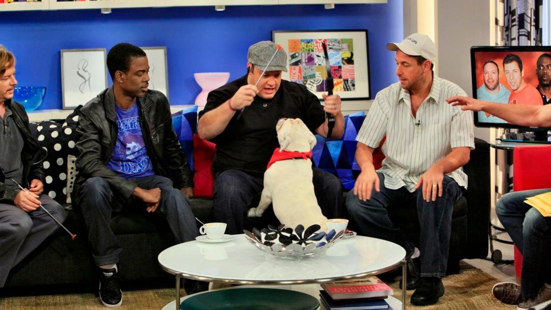 fruehstuecksfernsehen-studiohund-lotte-in-action-im-studio-074 - Bildquelle: Ingo Gauss