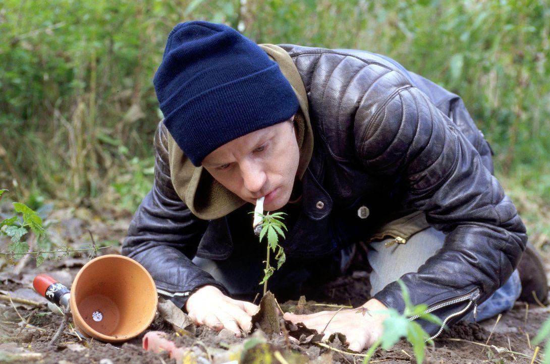 Krause (Josef Krause) pflanzt ein Marihuana-Pflänzchen ein. Keine gute Idee ... - Bildquelle: Kerpensian Sat.1