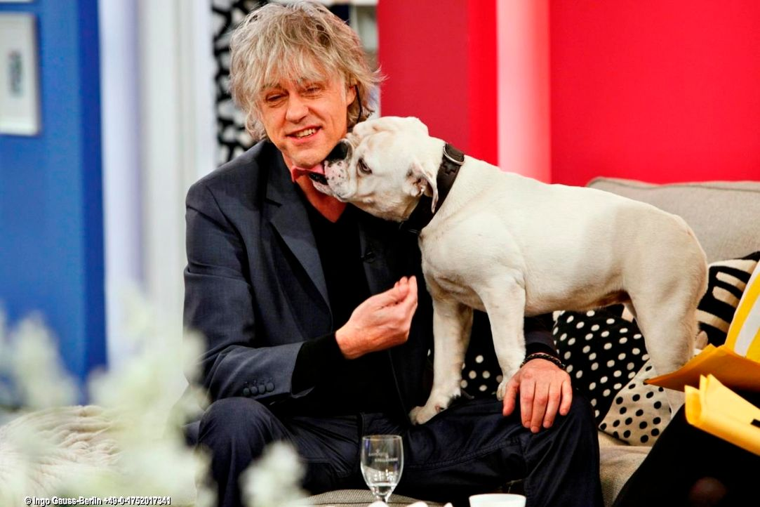 fruehstuecksfernsehen-studiohund-lotte-in-action-im-studio-116 - Bildquelle: Ingo Gauss