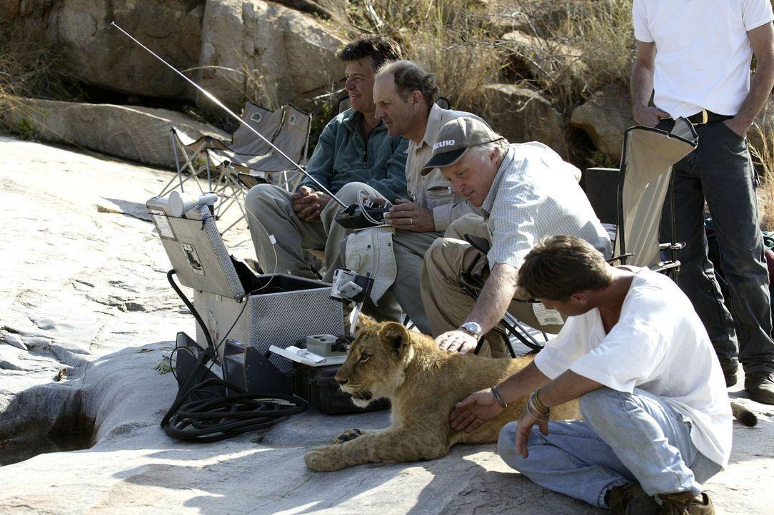 Die Crew, (v.l.n.r.) Regisseur und Produzent John Downer, Kameramann Mike Richards, Geoff Bell und Tony, widmen sich während einer Drehpause dem ju... - Bildquelle: BBC/John Downer
