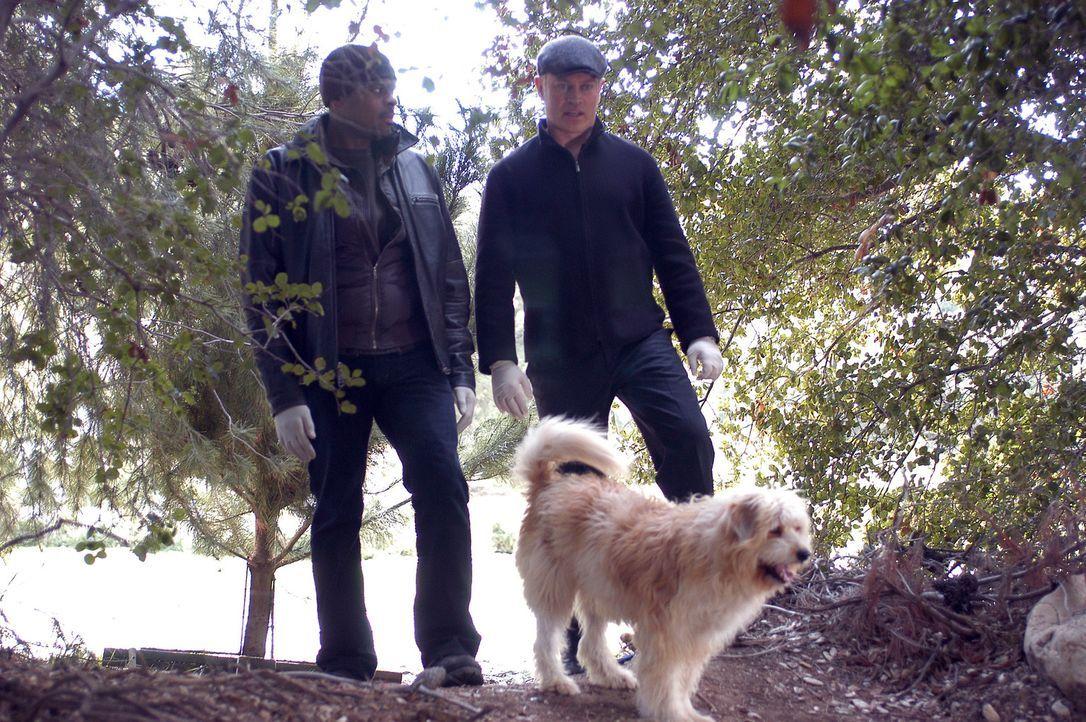 Bei ihren Nachforschungen, werden Connor (Neal McDonough,r.) und Powell (Troy Winbush, l.) von einem Hund an ein verstecktes Grab geführt ... - Bildquelle: CBS Television