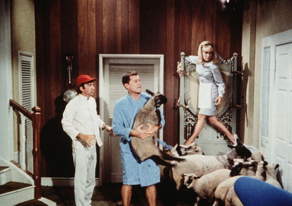 Der Präsident der Vereinigten Staaten möchte bei Tony (Larry Hagman, M.) Lammrücken vorgesetzt bekommen. Deshalb hat der junge Flaschengeist Harold... - Bildquelle: Columbia Pictures