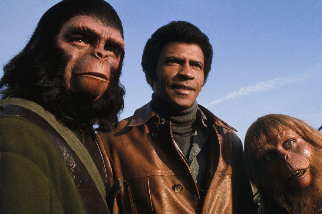 Während sich Caesar (Roddy McDowall, l.) mit Berater Virgil (Paul Williams, r.) und seinem menschlichen Freund MacDonald (Austin Stoker, M.) zu eine... - Bildquelle: 20TH CENTURY FOX FILM CORPORATION