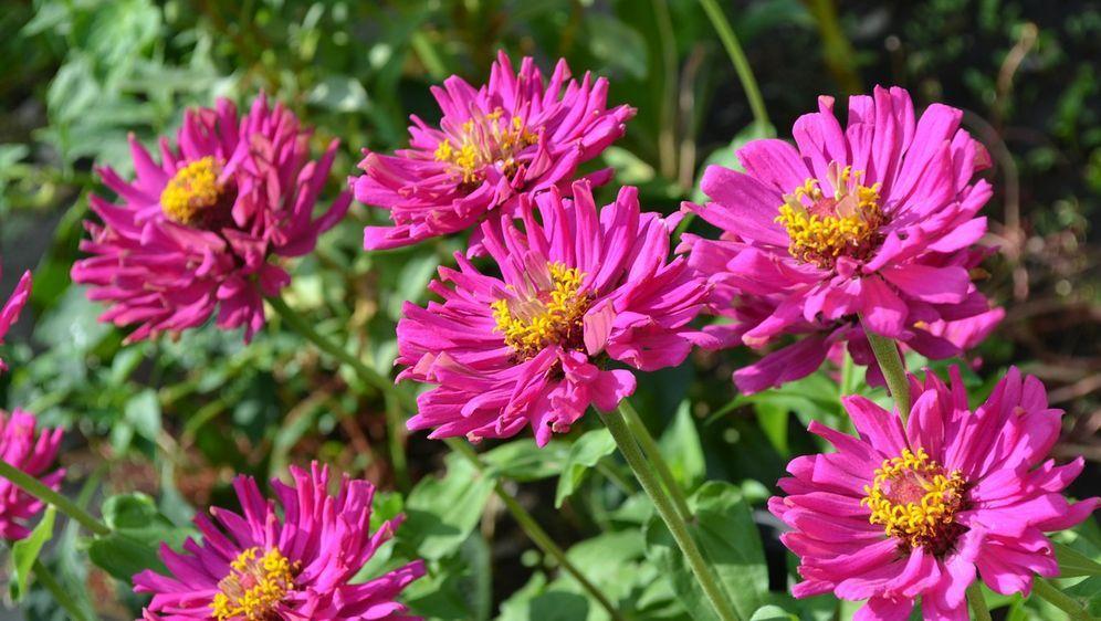 Herbstblumen Fur Hochzeit Oder Garten Sat 1 Ratgeber