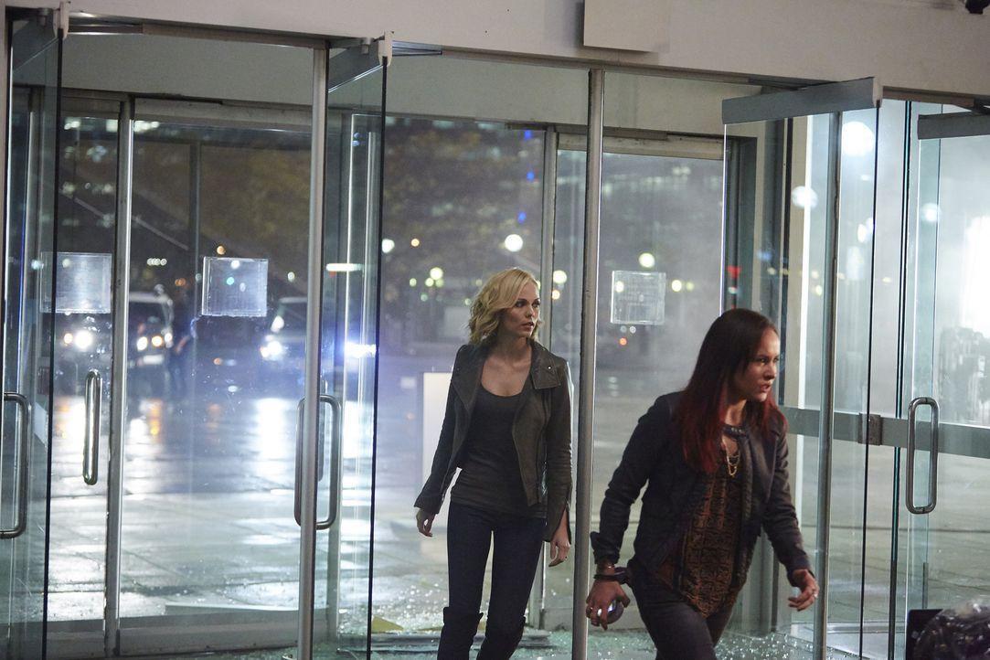 Als Aleister seine Mutter aufspürt, ist auch Paige (Tommie-Amber Pirie, r.) plötzlich nicht mehr sie selber. Kann Elena (Laura Vandervoort, l.) die... - Bildquelle: 2015 She-Wolf Season 2 Productions Inc.
