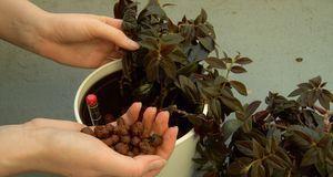 Blähton im Blumenkasten verhindert, dass sich Staunässe bildet – wichtig, wen...