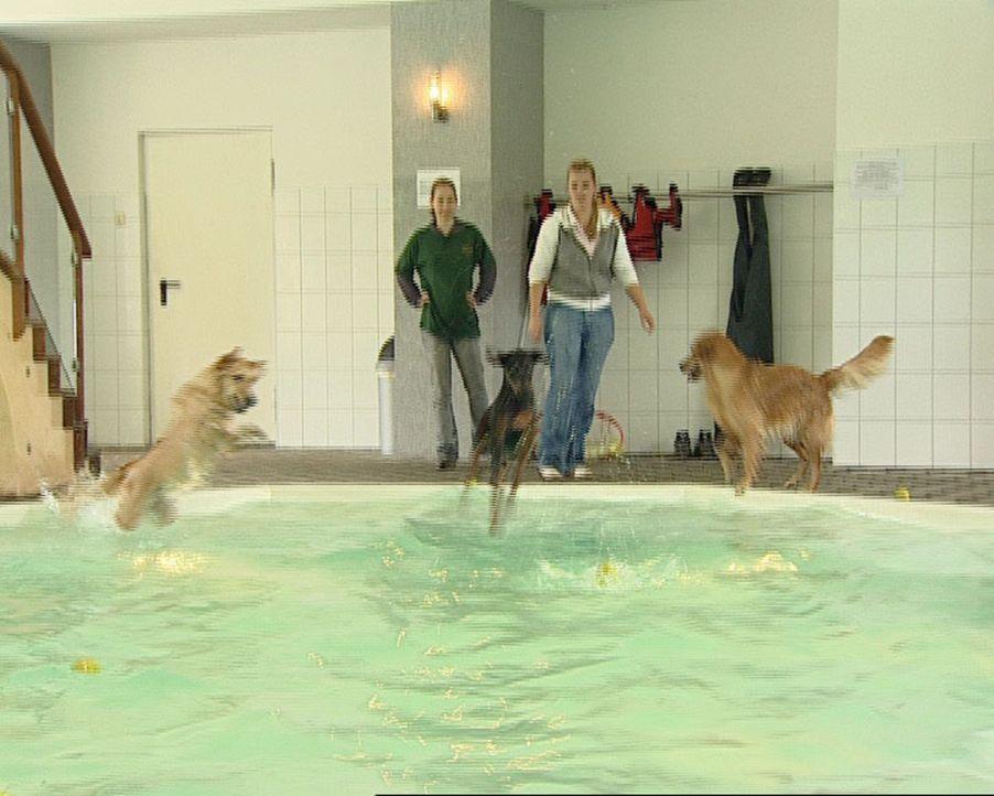 Ca. fünf Millionen Hunde leben in Deutschlands Haushalten. Was, wenn Frauchen oder Herrchen in Urlaub, krank oder verhindert sind? In Berlin bietet... - Bildquelle: Sat.1