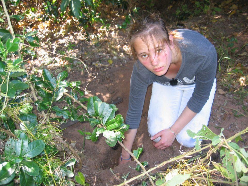 Muss im Dschungel nach essbaren Wurzeln suchen: Dana ... - Bildquelle: kabel eins