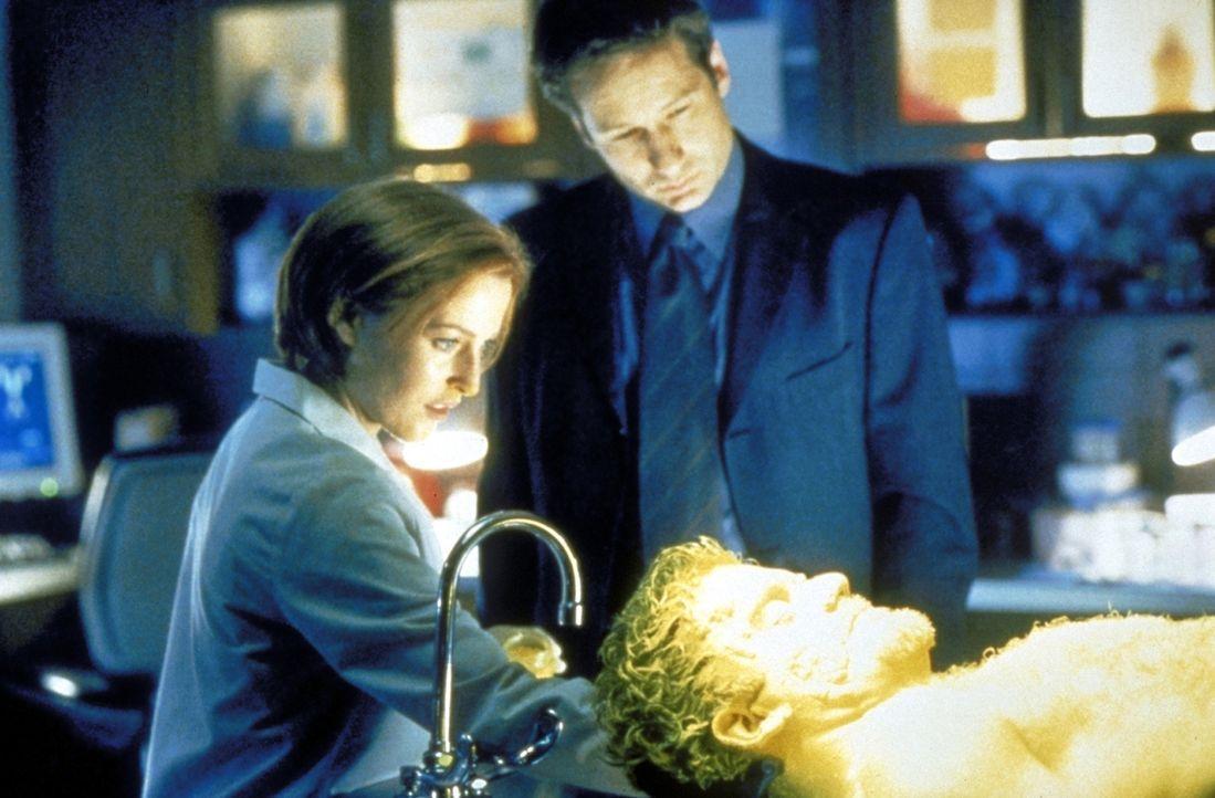 Scully (Gillian Anderson, l.) zeigt Mulder (David Duchovny, M.) die Leiche von Anson Stokes (Kevin Weisman, r.), die Scully mit Hilfe von gelbem Pud... - Bildquelle: TM +   2000 Twentieth Century Fox Film Corporation. All Rights Reserved.