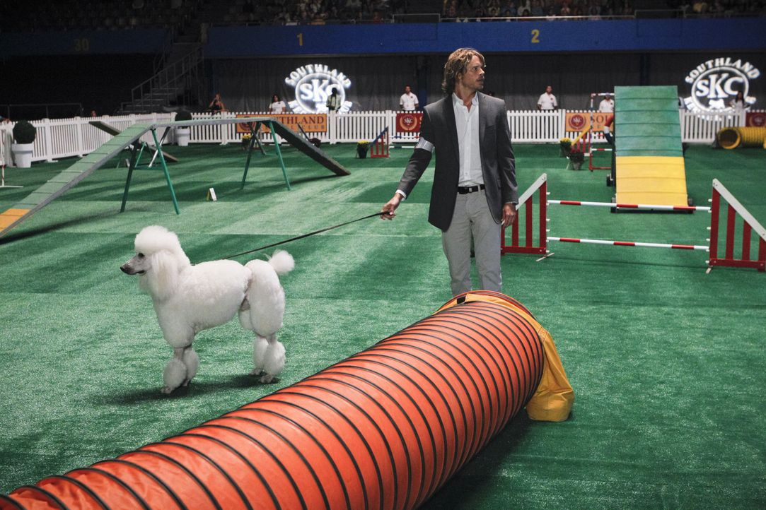 Muss auf einer Hundeshow verdeckt ermitteln: Deeks (Eric Christian Olsen) ... - Bildquelle: CBS Studios Inc. All Rights Reserved.