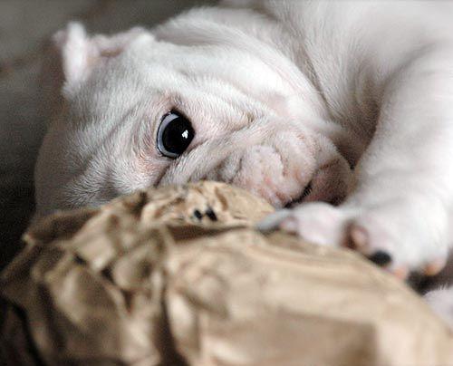 fruehstuecksfernsehen-studiohund-lotte-baby-022 - Bildquelle: Stefan Pulvermüller