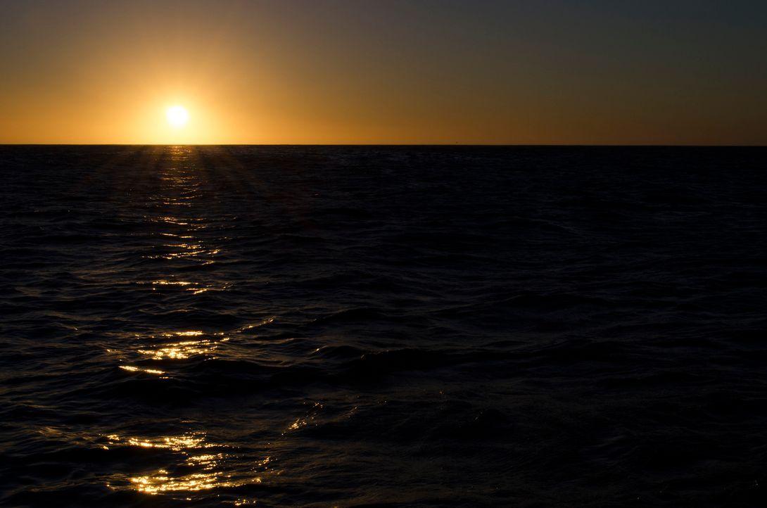 Wenn die Sonne über dem Meer vor der Küste Südafrikas untergeht, kann man sich kaum vorstellen, dass dieses romantische Szenario von den Attacken ei... - Bildquelle: Brian Girard / Kris Olson Discovery Channel