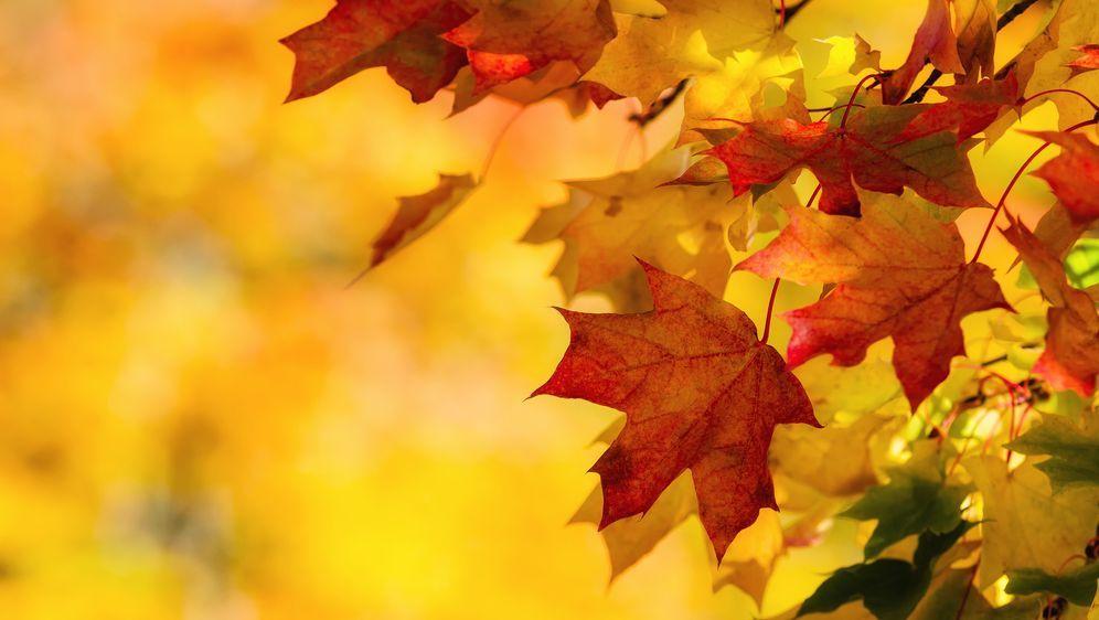 Basteln mit Laub: Kreative Ideen für den Herbst - Bildquelle: leekris - Fotolia