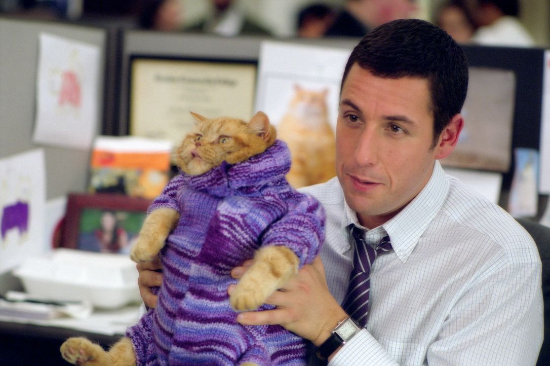 Der zurückhaltende Dave Buznik (Adam Sandler) kann keiner Fliege etwas zuleide tun. Trotzdem schafft es der schüchterne Katzenkleidung-Designer, e... - Bildquelle: 2003 Sony Pictures Television International. All Rights Reserved.