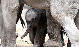 150714_Baby-Elefant_fliesstext_goetz-berlik2