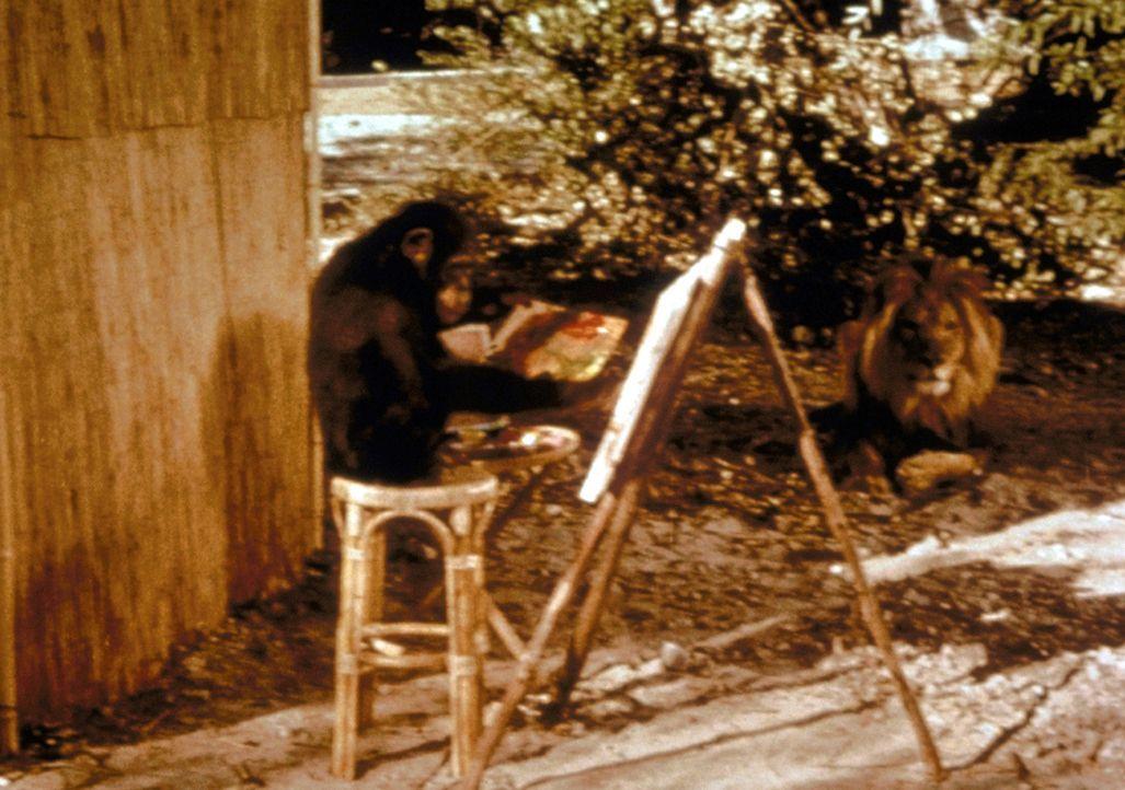 Das Schimpansenweibchen Judy hat ein Hobby: Es malt für sein Leben gern .... - Bildquelle: CBS Television