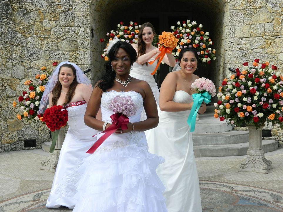 Sehen den vier Hochzeiten erwartungsvoll entgegen: Kim (l.), Debbie (2.v.l.), Bianca (2.v.r.) und Vivian (r.) ... - Bildquelle: Richard Vagg DCL