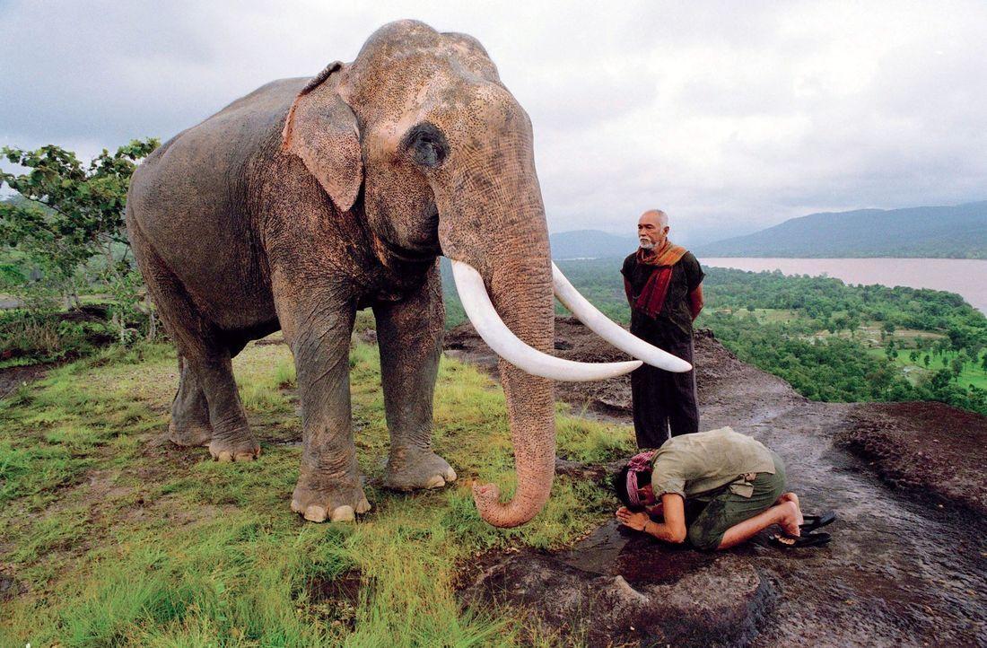 Kham (Tony Jaa, vorne) und sein Vater (Sotorn Rungruaeng, hinten) verehren die Elefanten des Dorfes zutiefst. Deshalb ist die Bestürzung sehr groß,... - Bildquelle: e-m-s the DVD-Company