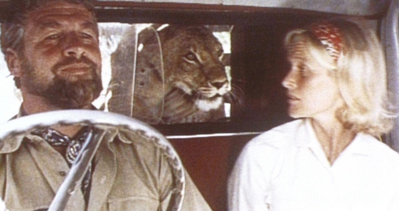 Schweren Herzens bringen Joy (Virginia McKenna, r.) und George (Bill Travers, l.) die inzwischen groß gewordene Löwin Elsa in die Wildnis zurück. - Bildquelle: 1965, renewed 1993 Columbia Pictures Industries, Inc. All Rights Reserved.
