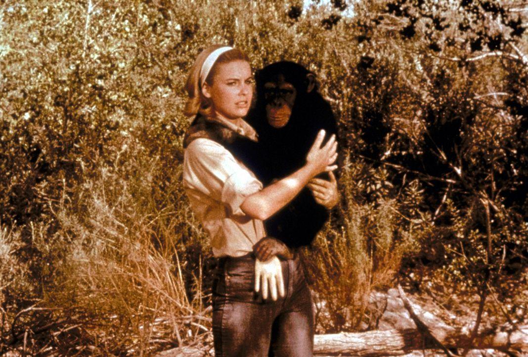 Auf der Buschstation kümmert sich Marshs Tochter Paula (Cheryl Miller) um das umtriebige Schimpansenweibchen Judy, das gerne ein gewaltiges Chaos au... - Bildquelle: CBS Television