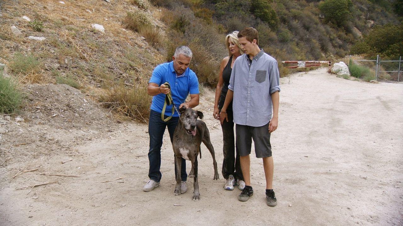 Leslie (M.) entdeckte den angefahren Junior am Straßenrand, doch seitdem der Hund wieder bei Kräften ist, haben Leslie und ihr Sohn Si (r.) nur Prob... - Bildquelle: National Geographic Channels/LWT Enterprises