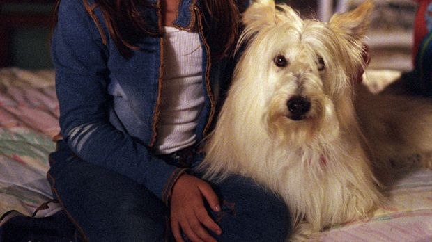 Ruthie (Mackenzie Rosman) erfährt durch Zufall, dass Simon gegen Bezahlung mi...