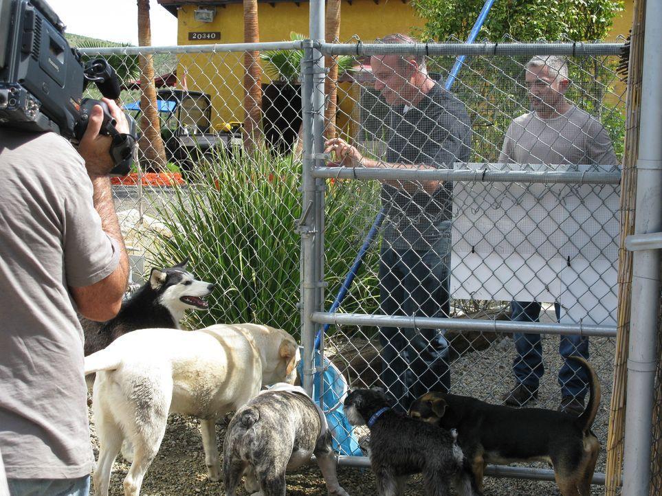 Heute kümmert sich Cesar (r.) mal nicht um Hunde, sondern um Menschen, die panische Angst vor seinen Lieblingsklienten haben. - Bildquelle: Ryan Cass MPH - Emery/Sumner Joint Venture