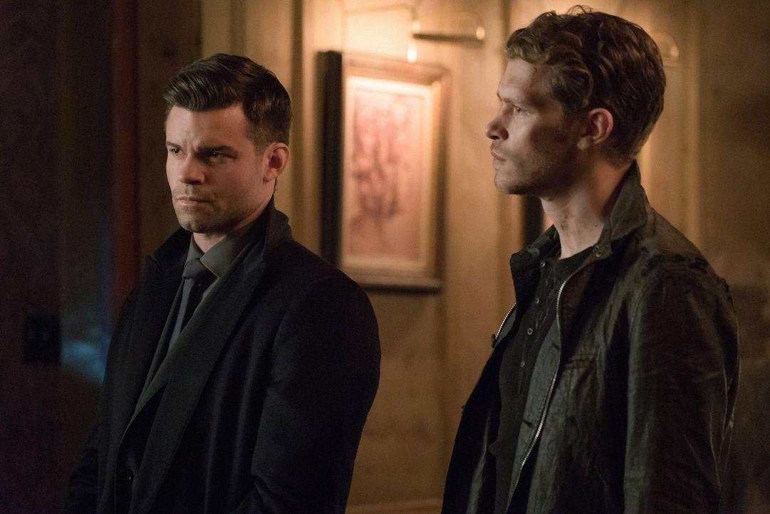 Während Freya ihren Bruder Elijah (Daniel Gillies, l.) in ihre gefährlichen Pläne einweiht, machen sich Klaus (Joseph Morgan, r.) und Hayley auf den... - Bildquelle: Warner Bros. Entertainment, Inc.