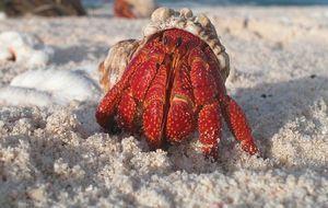 krabbe-sand