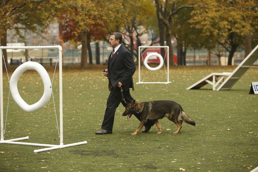 Frank (Tom Selleck) wird von dem aggressiven Verhalten eines Polizeihundes berichtet. Da das Tier jedoch bis jetzt ausgezeichnete Arbeit geleistet h... - Bildquelle: 2013 CBS Broadcasting Inc. All Rights Reserved.