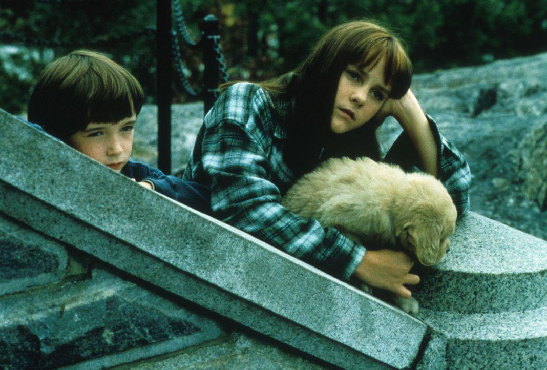 Die beiden Kinder Ben (Liam Aiken, l.) und Anna (Jena Malone, r.) leiden unter der Trennung ihrer Eltern ... - Bildquelle: Columbia Pictures