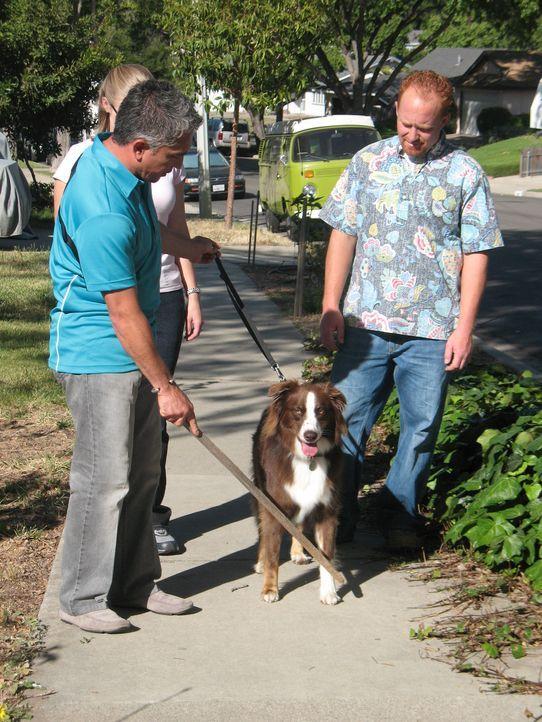 """Chris (r.) hofft, dass der Hundeflüsterers Cesar Millan (l.) es schafft, die Schäferhündin Annabelle """"sozialkompatibel"""" zu machen ... - Bildquelle: Rive Gauche Intern. Television"""
