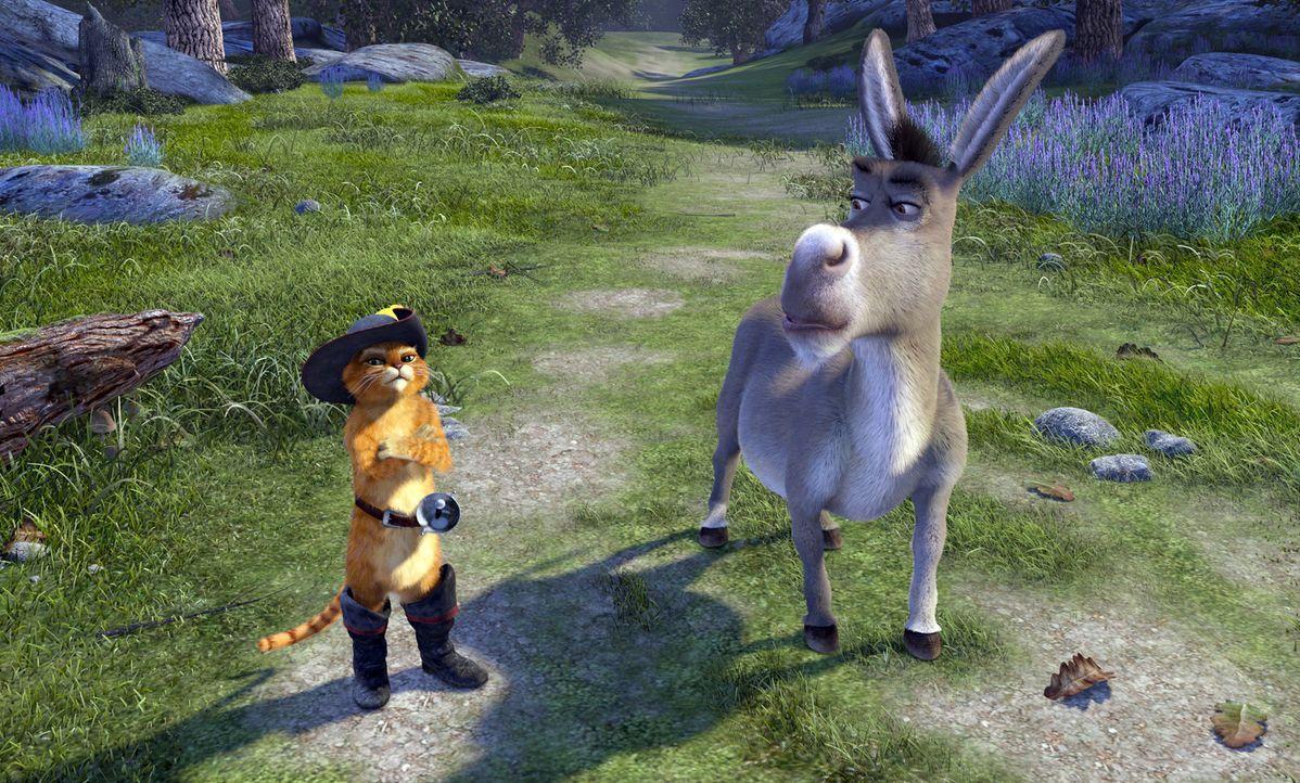 Noch ahnt der ewig plappernde Esel Donkey, r. nicht, dass er sich im Visier des berühmt berüchtigten Oger-Killers, l. befindet ... - Bildquelle: DreamWorks SKG