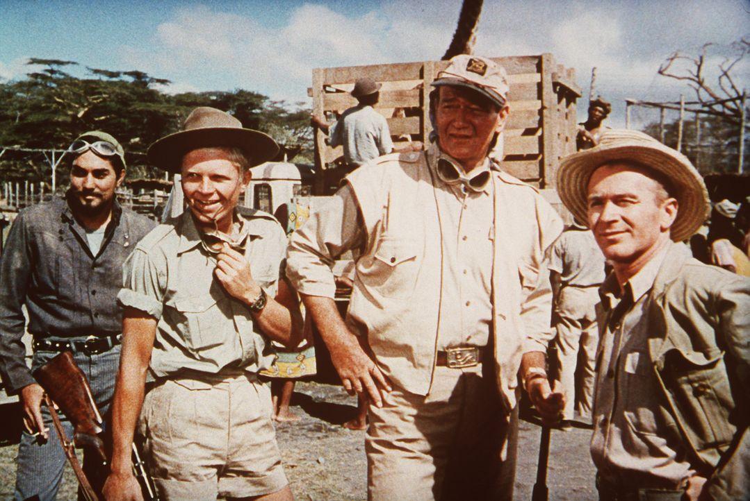 Sean Mercer (John Wayne, M.), Kurt Stahl (Hardy Krüger, 2.v.l.) und Pockets (Red Buttons, r.) sind unschlagbar, wenn es darum geht, Tiere des Dschun... - Bildquelle: Paramount Pictures