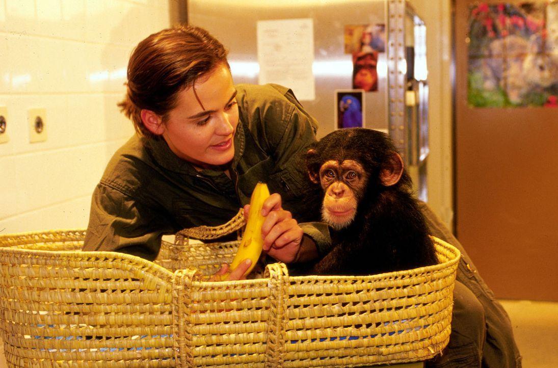 Tierpflegerin Marie (Tilla Borgelt) kümmert sich liebevoll auf der Quarantänestation des Zoos um einen kleinen erkrankten Affen. Während der Pflege... - Bildquelle: Oliver Pflug Sat.1/Pflug