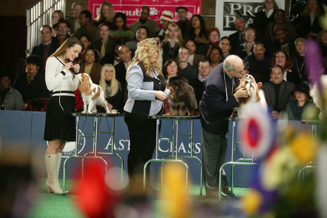 """Bei der Hundschau schneiden Charlotte (Kristin Davis, l.) und """"Elizabeth Taylor"""" gut ab ... - Bildquelle: Paramount Pictures"""