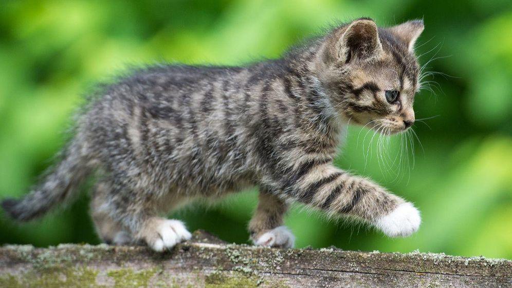358b126f6ba039 Australien will zwei Millionen Katzen töten