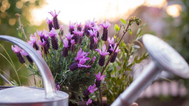 Gießkanne-Blumen-Sommer-pixabay