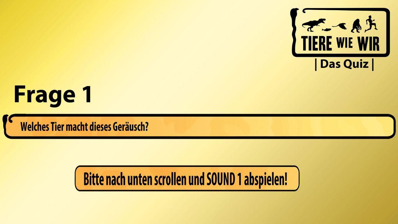 1_Frage_Sound