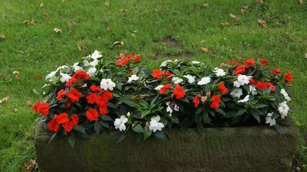 Blumenbeet-Beet-Stein-pixabay